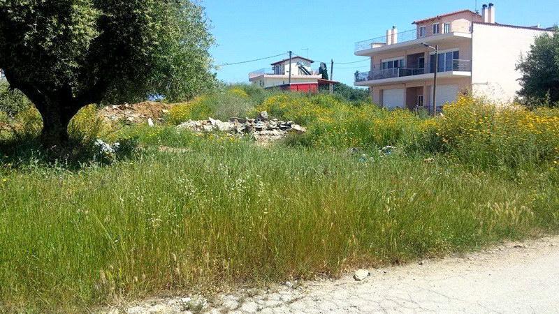 Ο Δήμος Αλεξανδρούπολης υπενθυμίζει την υποχρέωση των δημοτών για τον καθαρισμό οικοπέδων και ακάλυπτων χώρων