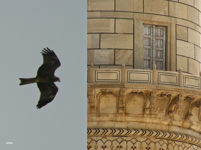 Hawk? and one of the towers by betitu