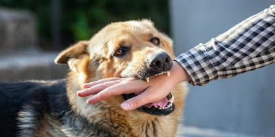 what to do if you're bitten by a dog