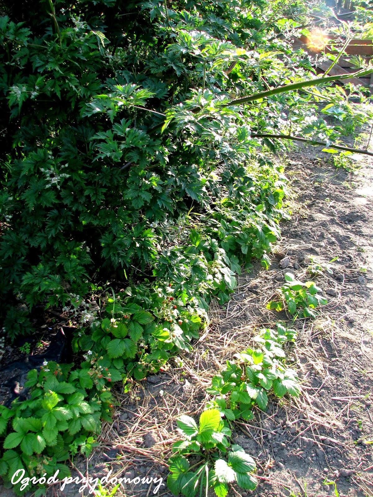 warzywnik, ogród przydomowy