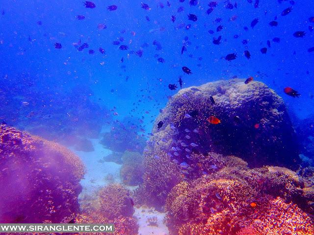diving in sabang beach