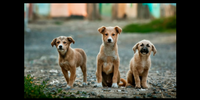 Dogs in Berlin