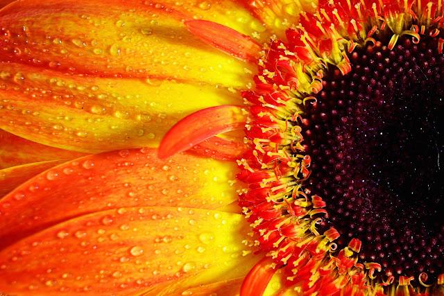 Flor mojada