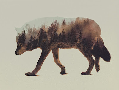 Andreas Lie Wolf Double Exposure