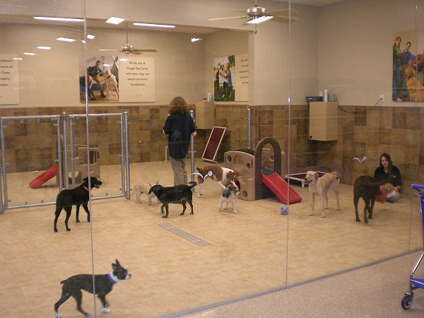 New Blog 1 Doggie Daycare