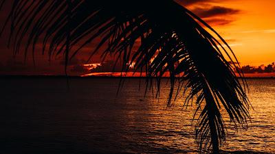 Palm Tree Beach Sunset HD Wallpaper