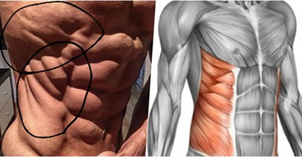 "To Get Those Coveted ""Fish Gills"" - Intercostals .. Use This Exercise"
