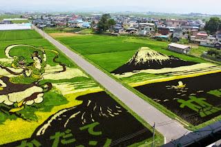 2014 Mt. Fuji & Hagoromo Legend Inakadate Rice Field Tanbo Art 平成26年 「富士山と羽衣伝説」 田舎館田んぼアート