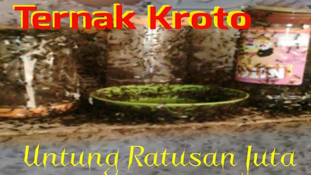 Budidaya Ternak Kroto