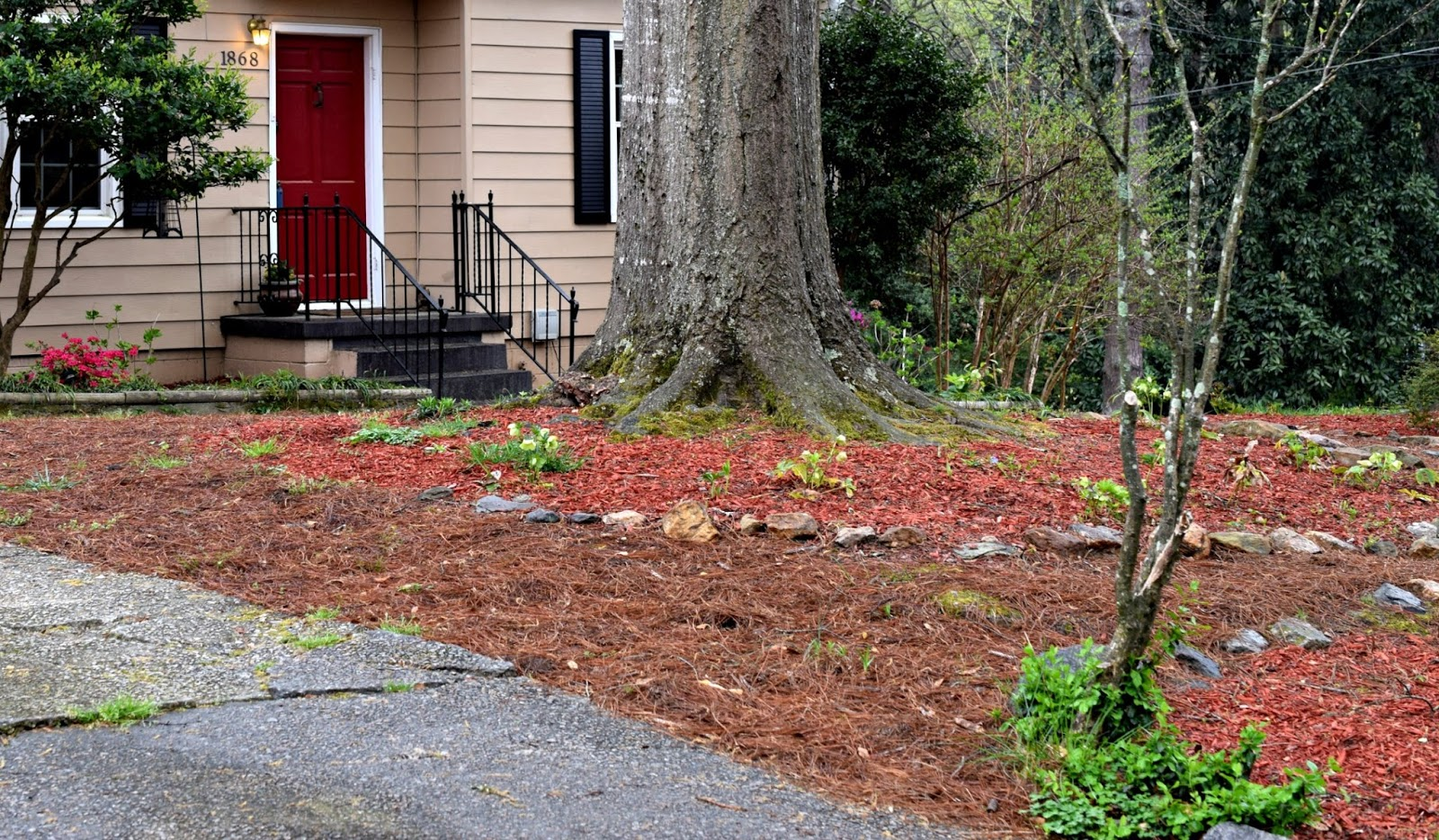 Using Georgia Native Plants Red Mulch Rant
