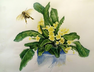 Honey Bee Flying : Detailed Coloured Pencil Drawing