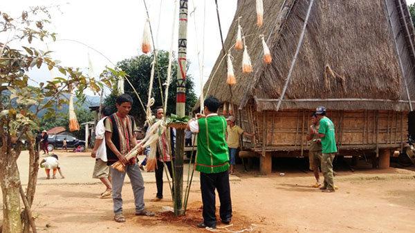 Dân làng dựng cây nêu chuẩn bị cho Lễ ăn lúa mới