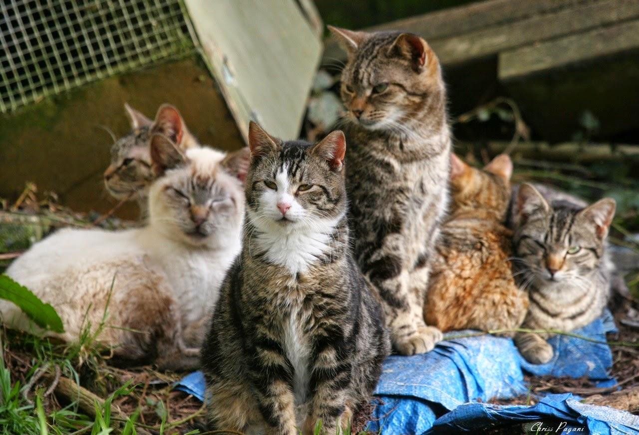 more feral cats and april wallpaper the feral life cat blog. Black Bedroom Furniture Sets. Home Design Ideas