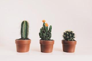 10 tipos de plantitas de interior fáciles de mantener