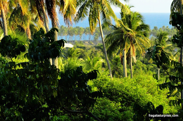 Coqueiral na Vila do Diogo, Litoral Norte da Bahia