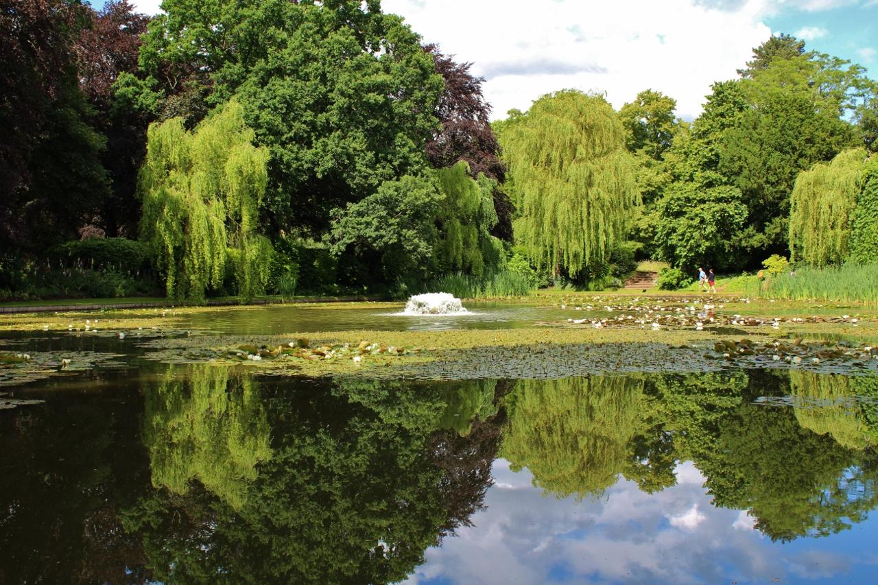 Ascott Lily Pond