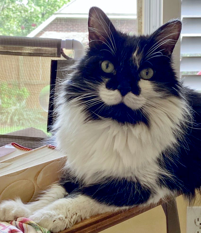 spike the cat, most handsome mustache kitty