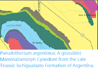 https://sciencythoughts.blogspot.com/2019/10/pseudotherium-argentinus-possible.html