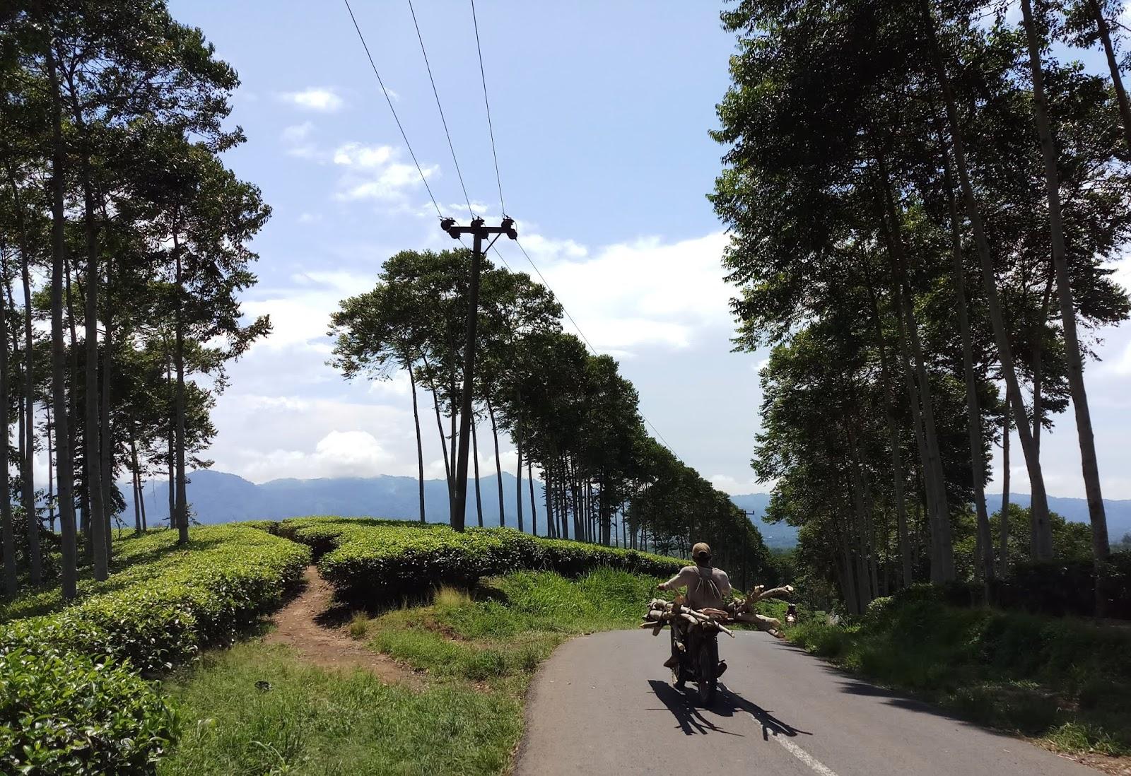 travelplusindonesia  Overland Tour Kota Bengkulu - Rejang Lebong ... de0d754105