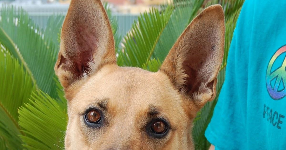 Nevada spca animal rescue sherri for Dog pound las vegas nevada