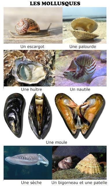 Zwierzęta - mięczaki - Francuski przy kawie