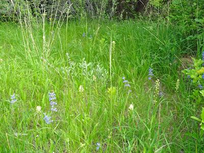 meadow, Boulder, CO