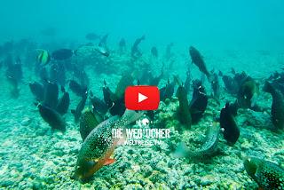 schnorcheln zum Korallenriff, Rasdhoo-Atoll, Malediven, Weltreise, Die Wegsucher