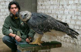 Ο ισχυρότερος αετός στον κόσμο <p data-wpview-marker=