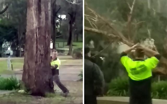 Ήθελε να κόψει το δέντρο και έφερε την καταστροφή