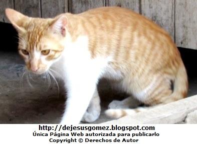 Foto de gato casero en la puerta de su casa. Foto de gato de Jesus Gómez