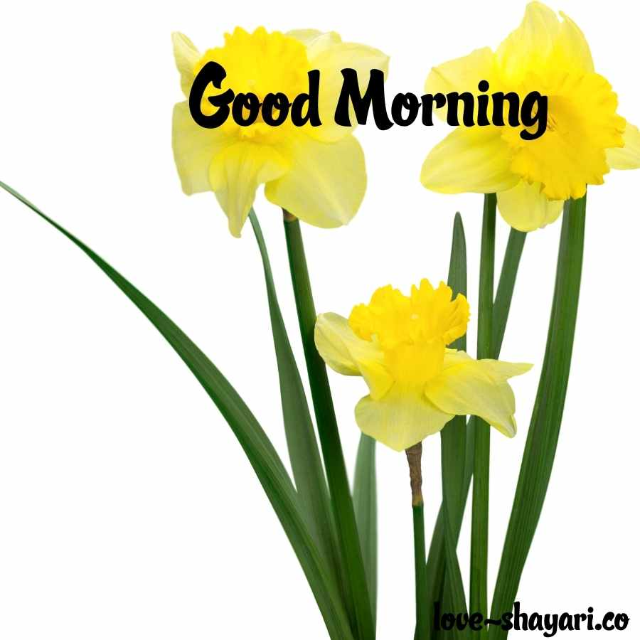 good morning images hd flowers