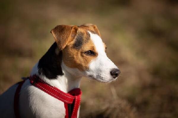 dogs hypoallergenic
