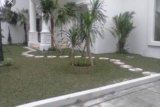 Jasa Pasang Rumput Gajah Mini Dan Pembuatan Taman