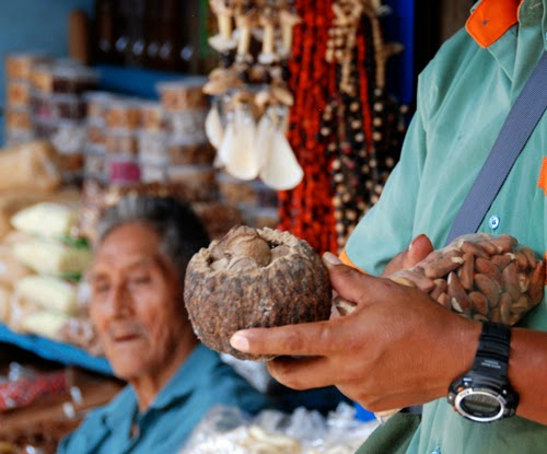 Brazilian Nuts Puerto Maldonado Peru