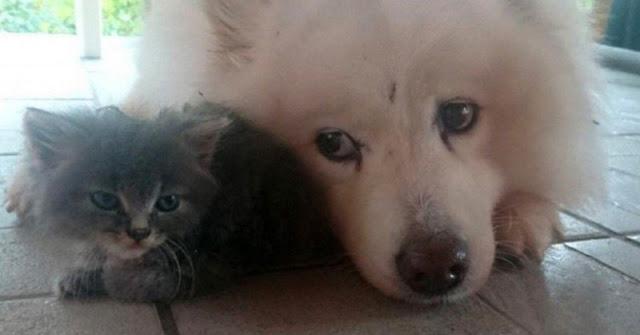 Этот серый комочек так бы и пропал на улице, но пес его нашел и спас
