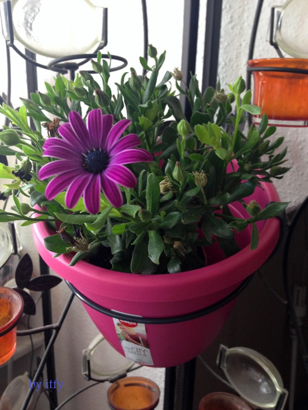 Beste Von Blumentöpfe Selber Machen Schema