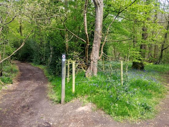 Sandridge restricted byway 1 on the western edge of Symondshyde Great Wood