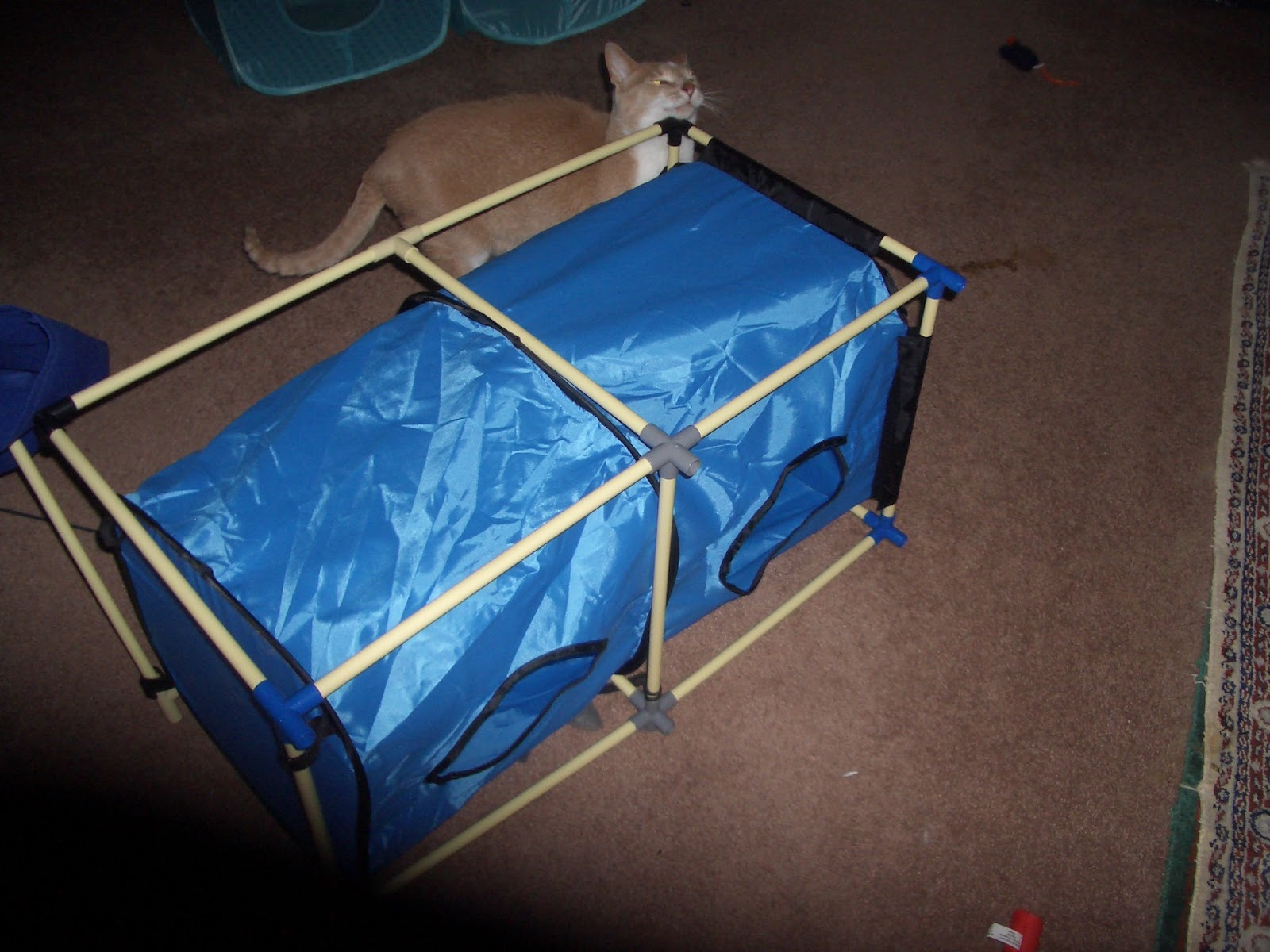 Vacuum Litter Boxes Zoe Bath Make Bed Laundry Organize