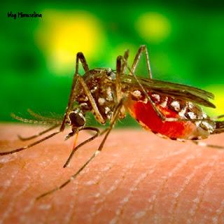 prevenir picadura mosquitos bebé blog mimuselina