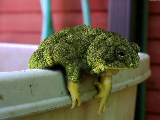 kombinasi unik photoshop hewan dan tanaman