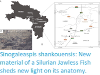https://sciencythoughts.blogspot.com/2020/07/sinogaleaspis-shankouensis-new-material.html
