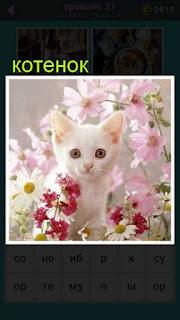 белый и пушистый котенок стоит среди розовых цветов 21 уровень 667 слов