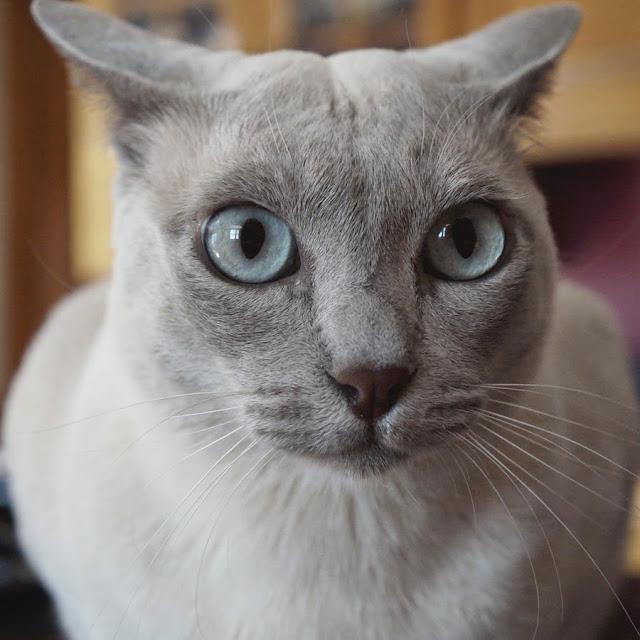 Fraidy cat is Fraidy!