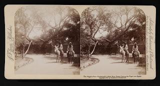 الشجرة سنة 1897م