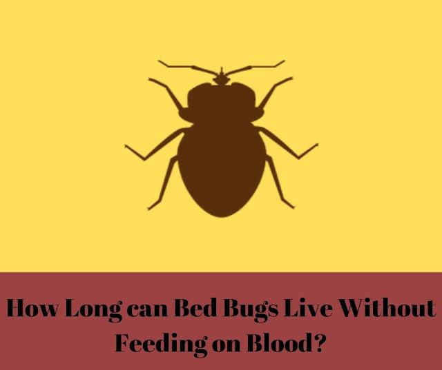 Bed Bug Life Span