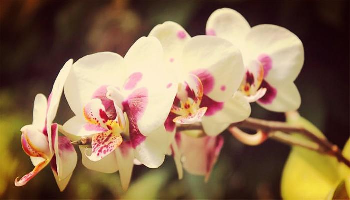 Orquídeas de jardin