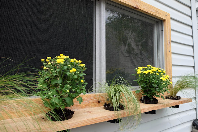 cedar wood frame plant