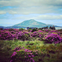 Images of Ireland: mountain and flowers in County Mayo