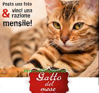 Logo Contest Leonardo gennaio 2020: vinci fornitura per gatto