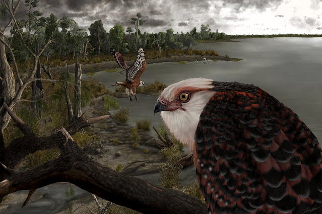 25-million-year-old ancient eagle ruled the roost in Australia